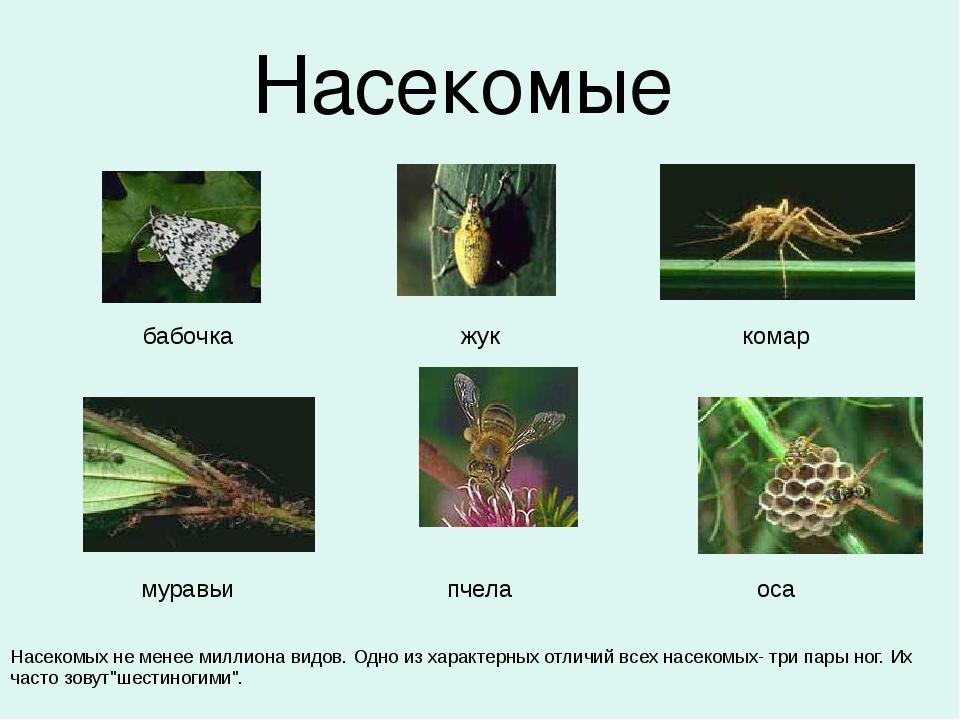 Насекомые  бабочка жук комар ...