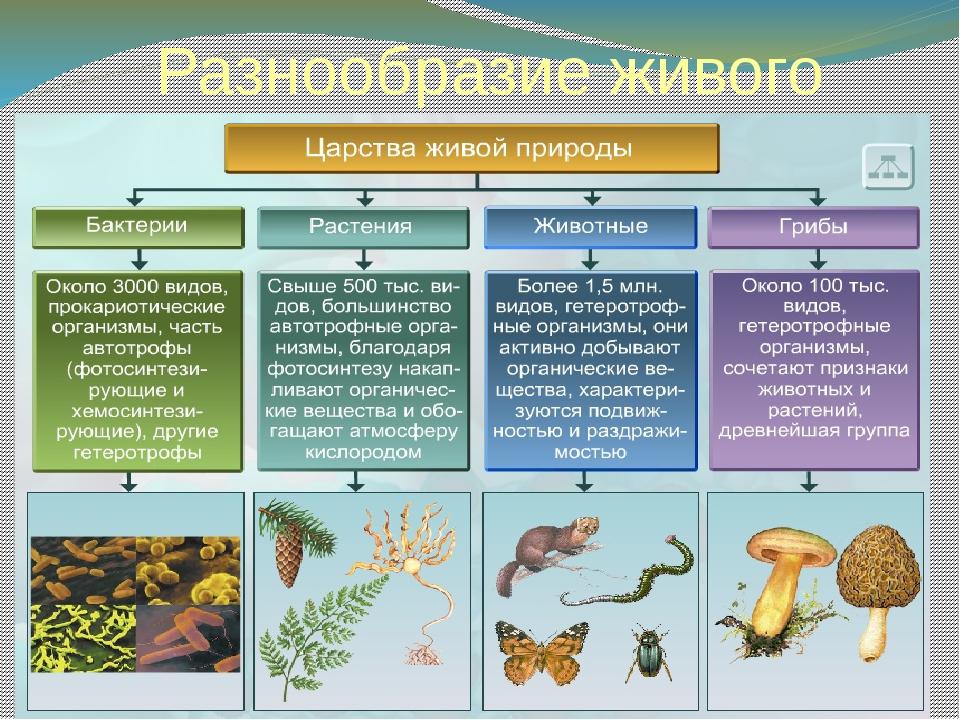 Разнообразие живого