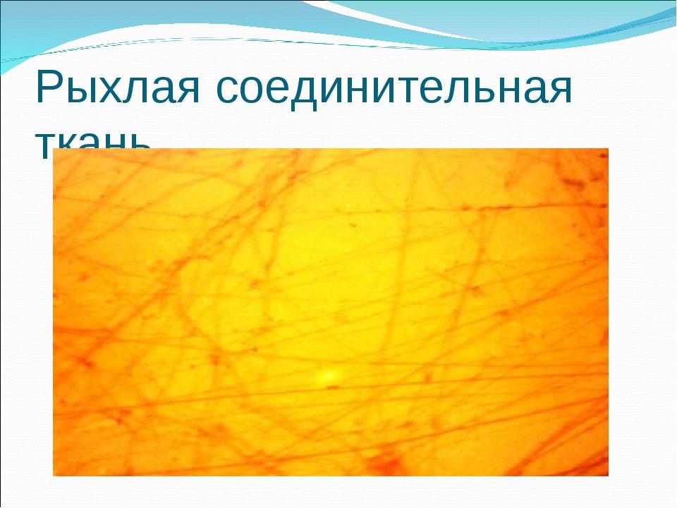 Рыхлая соединительная ткань