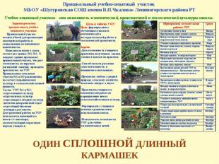 Пришкольный учебно-опытный участок МБОУ «Шугуровская СОШ имени В.П.Чкалова» Л