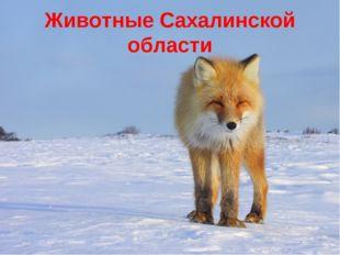 Животные Сахалинской области