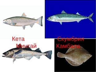 Кета Скумбрия Минтай Камбала
