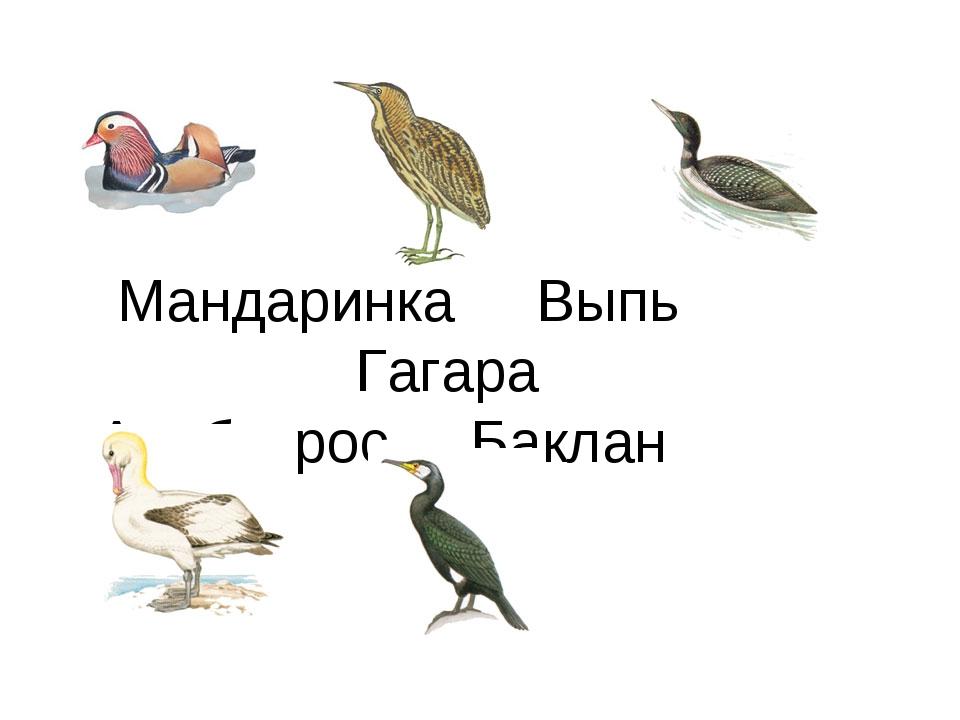 Мандаринка Выпь Гагара Альбатрос Баклан