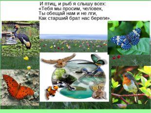 И птиц, и рыб я слышу всех: «Тебя мы просим, человек, Ты обещай нам и не лги