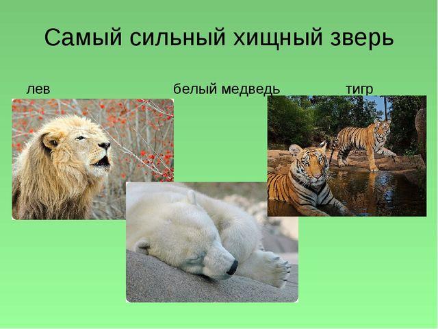 Самый сильный хищный зверь лев белый медведь тигр