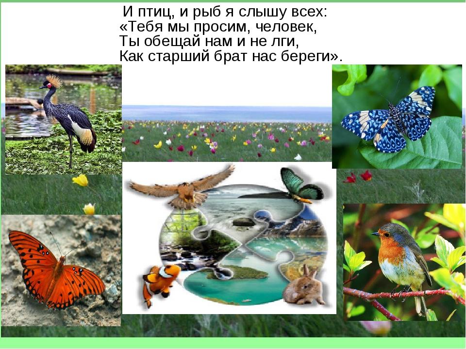И птиц, и рыб я слышу всех: «Тебя мы просим, человек, Ты обещай нам и не лги...