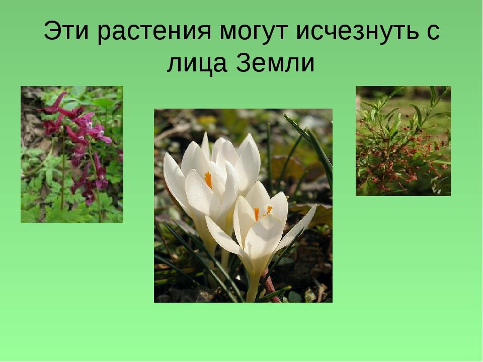 Эти растения могут исчезнуть с лица Земли