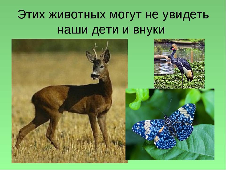Этих животных могут не увидеть наши дети и внуки