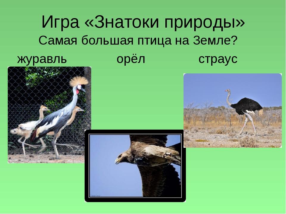 Игра «Знатоки природы» Самая большая птица на Земле? журавль орёл страус