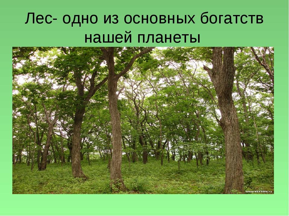 Лес- одно из основных богатств нашей планеты