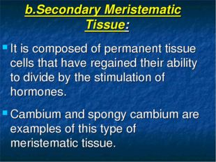 b.Secondary Meristematic Tissue: It is composed of permanent tissue cells tha
