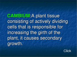 CAMBIUM:A plant tissue consisting of actively dividing cells that is respons