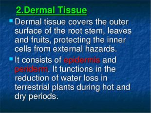 2.Dermal Tissue Dermal tissue covers the outer surface of the root stem, lea