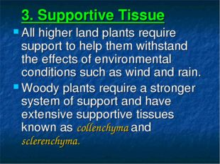 3. Supportive Tissue All higher land plants require support to help them wit