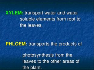 XYLEM: transport water and water soluble elements from root to the leaves. P