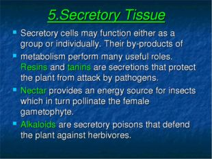 5.Secretory Tissue Secretory cells may function either as a group or individu