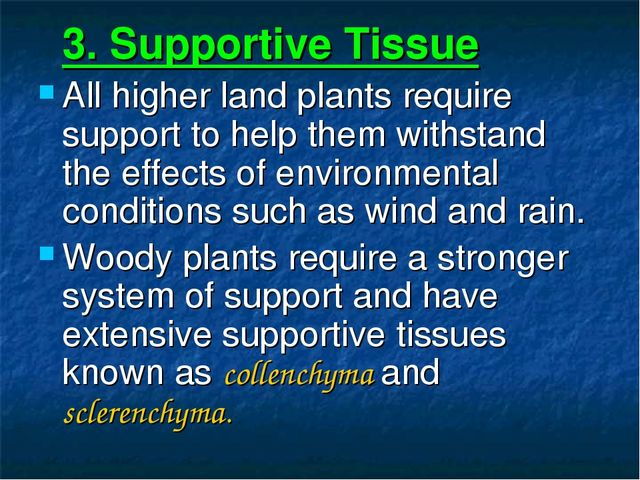 3. Supportive Tissue All higher land plants require support to help them wit...