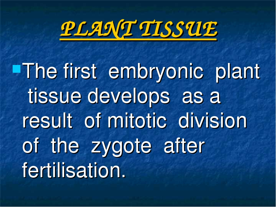 PLANT TISSUE The first embryonic plant tissue develops as a result of mitotic...