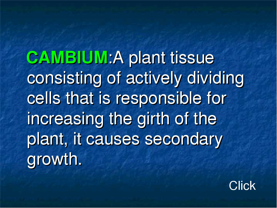 CAMBIUM:A plant tissue consisting of actively dividing cells that is respons...