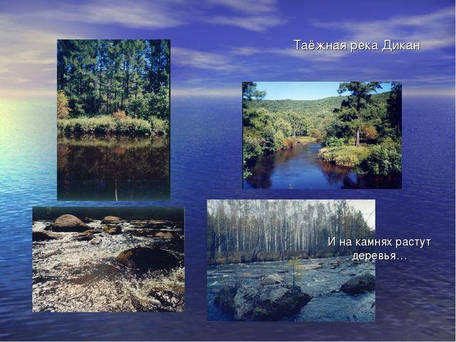 Таёжная река Дикан И на камнях растут деревья…