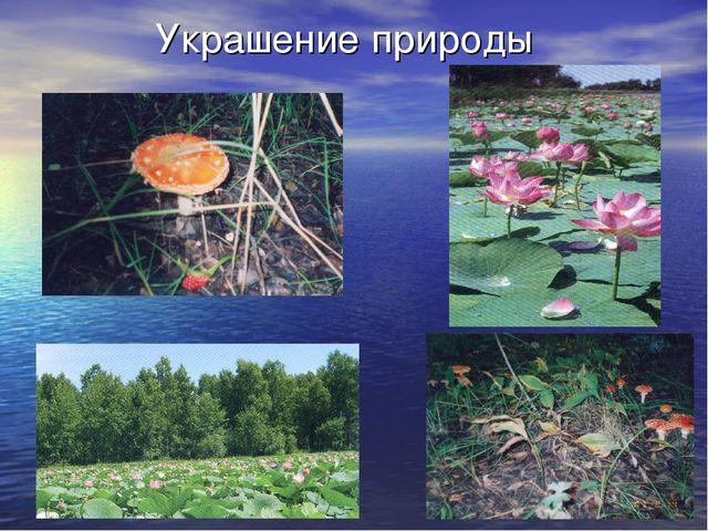 Украшение природы