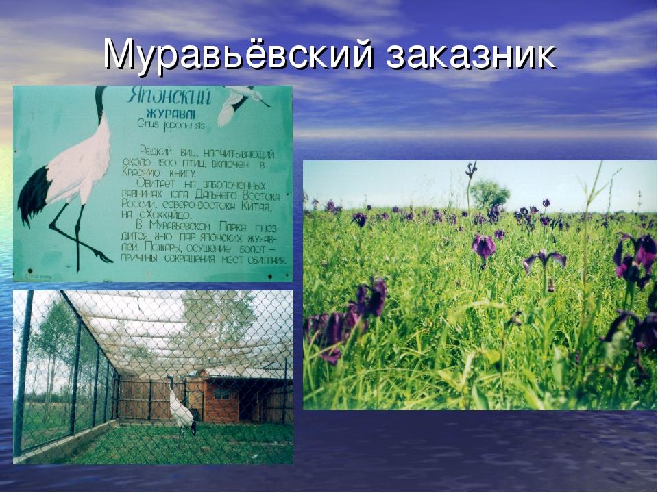 Муравьёвский заказник