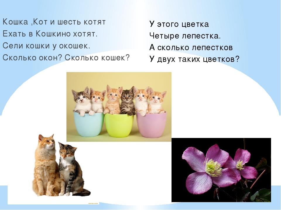 Кошка ,Кот и шесть котят Ехать в Кошкино хотят. Сели кошки у окошек. Сколько...