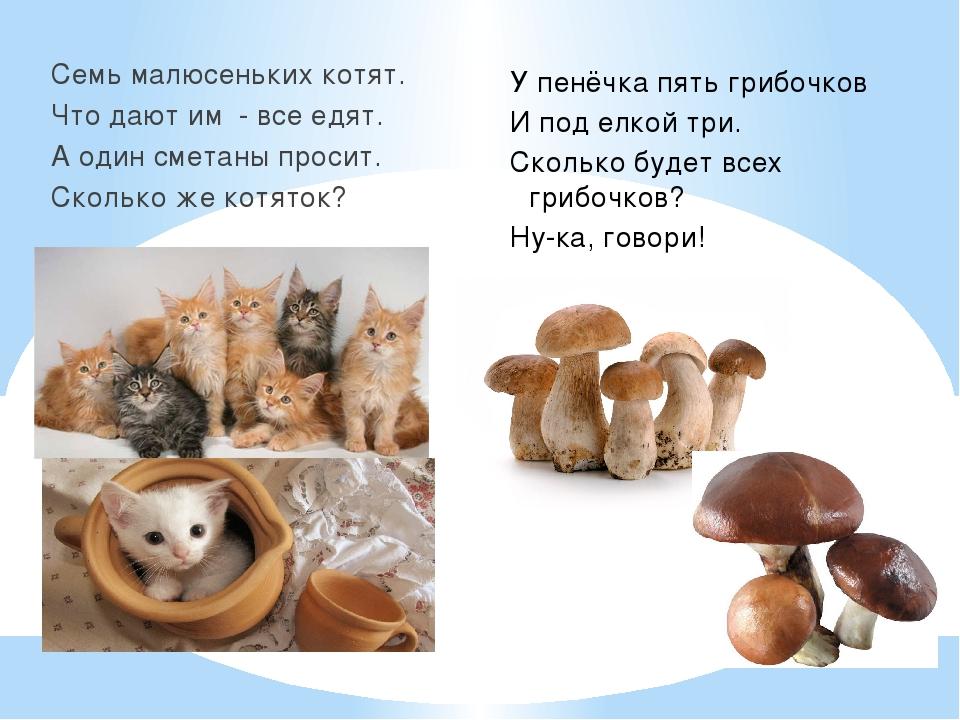 Семь малюсеньких котят. Что дают им - все едят. А один сметаны просит. Скольк...