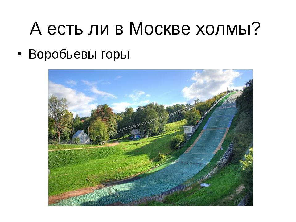 А есть ли в Москве холмы? Воробьевы горы
