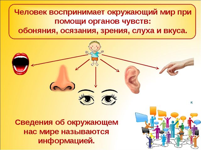 Человек воспринимает окружающий мир при помощи органов чувств: обоняния, осяз...