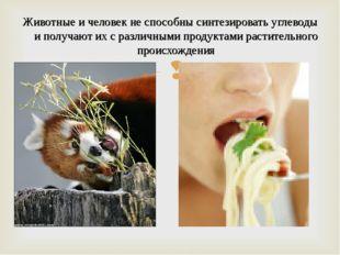 Животные и человек не способны синтезировать углеводы и получают их с различн