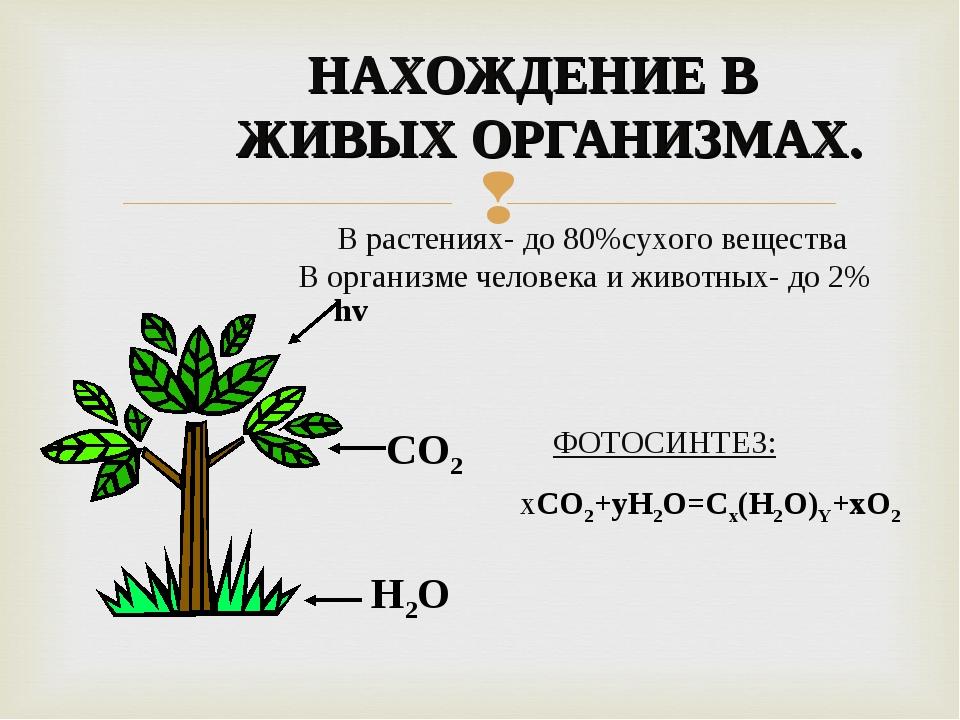 НАХОЖДЕНИЕ В ЖИВЫХ ОРГАНИЗМАХ. В растениях- до 80%сухого вещества В организме...