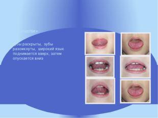 губы раскрыты, зубы разомкнуты, широкий язык поднимается вверх, затем опуска