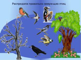 Распредели правильно зимующих птиц