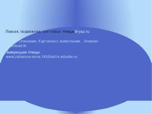 Ловкая, подвижная, суетливая птица.lit-yaz.ru Зимующиептицы. www.zaharova-an