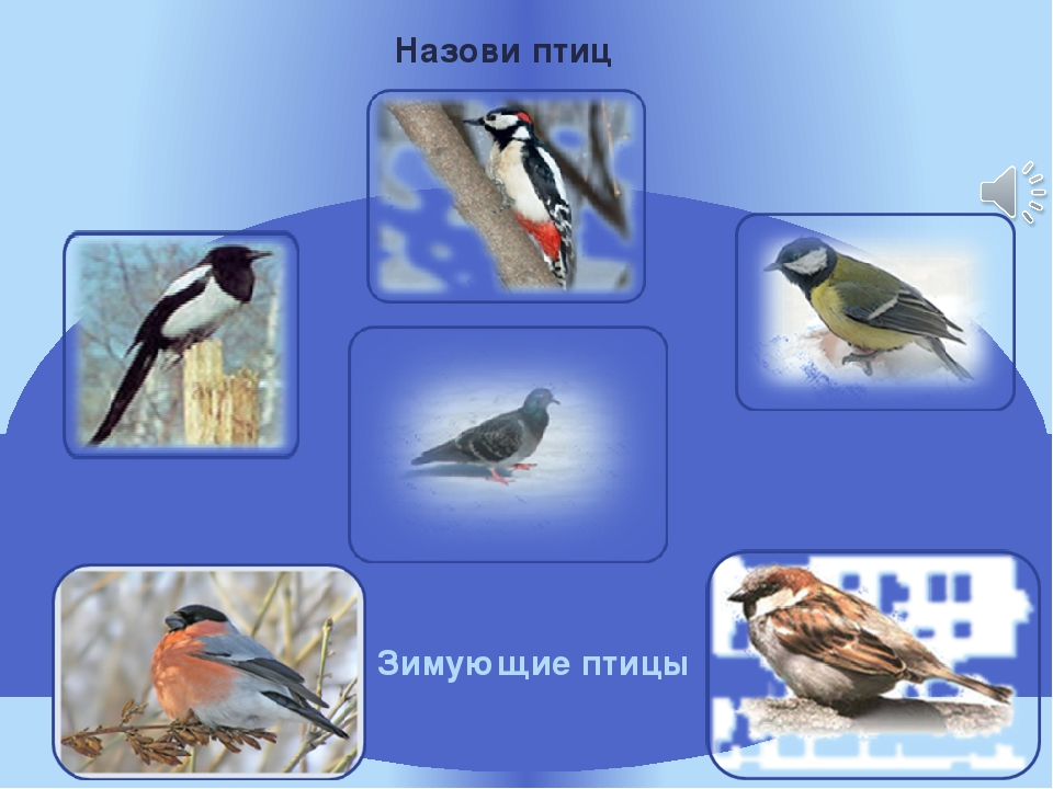 Назови птиц Зимующие птицы