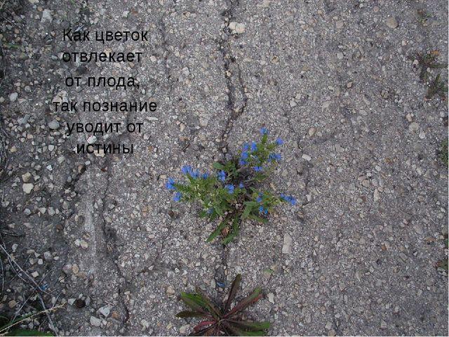 Как цветок отвлекает от плода, так познание уводит от истины