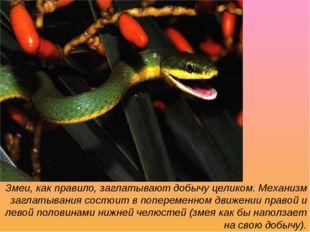 Змеи, как правило, заглатывают добычу целиком. Механизм заглатывания состоит