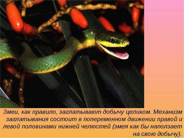 Змеи, как правило, заглатывают добычу целиком. Механизм заглатывания состоит...