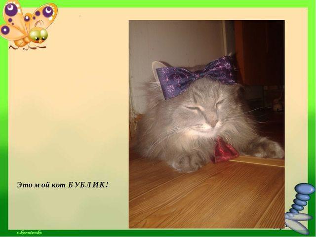 Это мой кот БУБЛИК!
