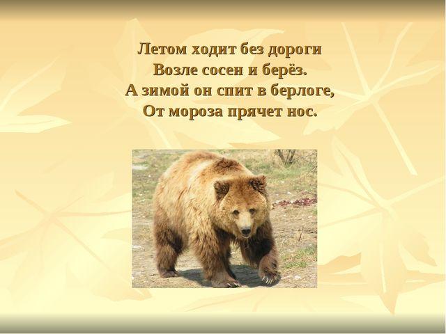 Летом ходит без дороги Возле сосен и берёз. А зимой он спит в берлоге, От мор...