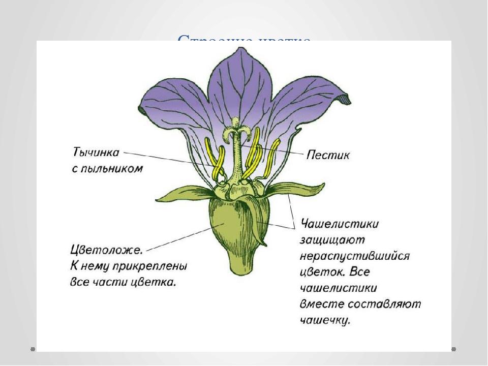 медицинских что значет цветок без правого липестка конкурсе вакансию директора