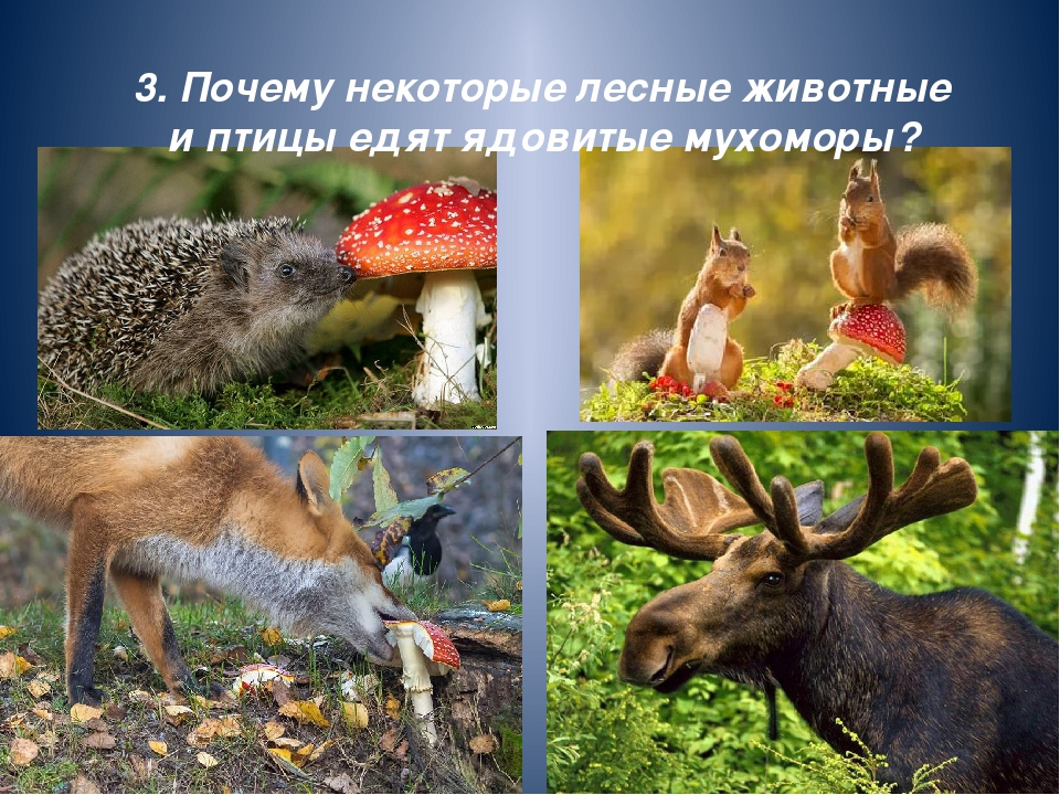 6. Какое животное не может прыгать?