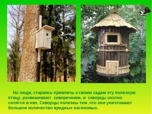 Но люди, стараясь привлечь к своим садам эту полезную птицу, развешивают скв