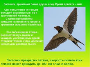 Ласточки прилетают позже других птиц. Время прилёта – май. Это полезнейшие пт