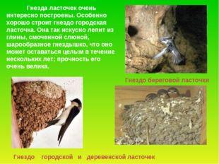 Гнездо береговой ласточки Гнездо городской и деревенской ласточек Гнезда ласт