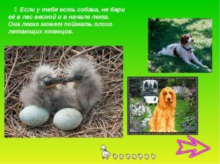 3. Если у тебя есть собака, не бери её в лес весной и в начале лета. Она лег