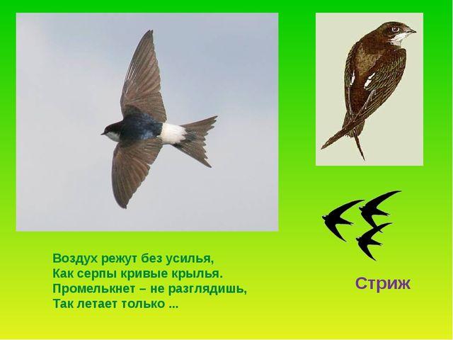 . Воздух режут без усилья, Как серпы кривые крылья. Промелькнет – не разгляди...