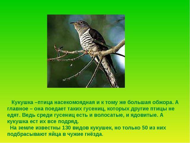 Кукушка –птица насекомоядная и к тому же большая обжора. А главное – она пое...