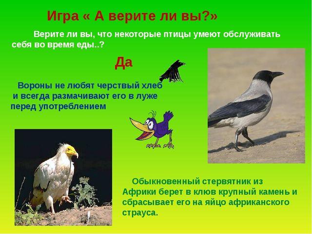 Верите ли вы, что некоторые птицы умеют обслуживать себя во время еды..? Вор...